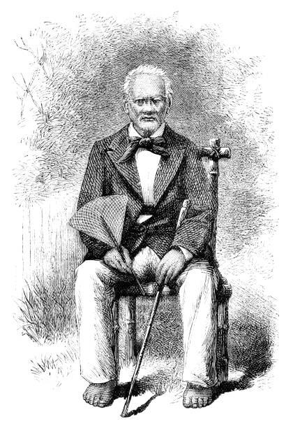 numangatini, king of mangaia - old man sitting chair drawing stock illustrations, clip art, cartoons, & icons