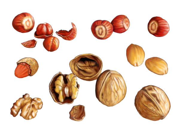 Nuts Assorted nuts: walnuts, almonds and hazelnuts. Digital illustration, clipping path included. frutta stock illustrations