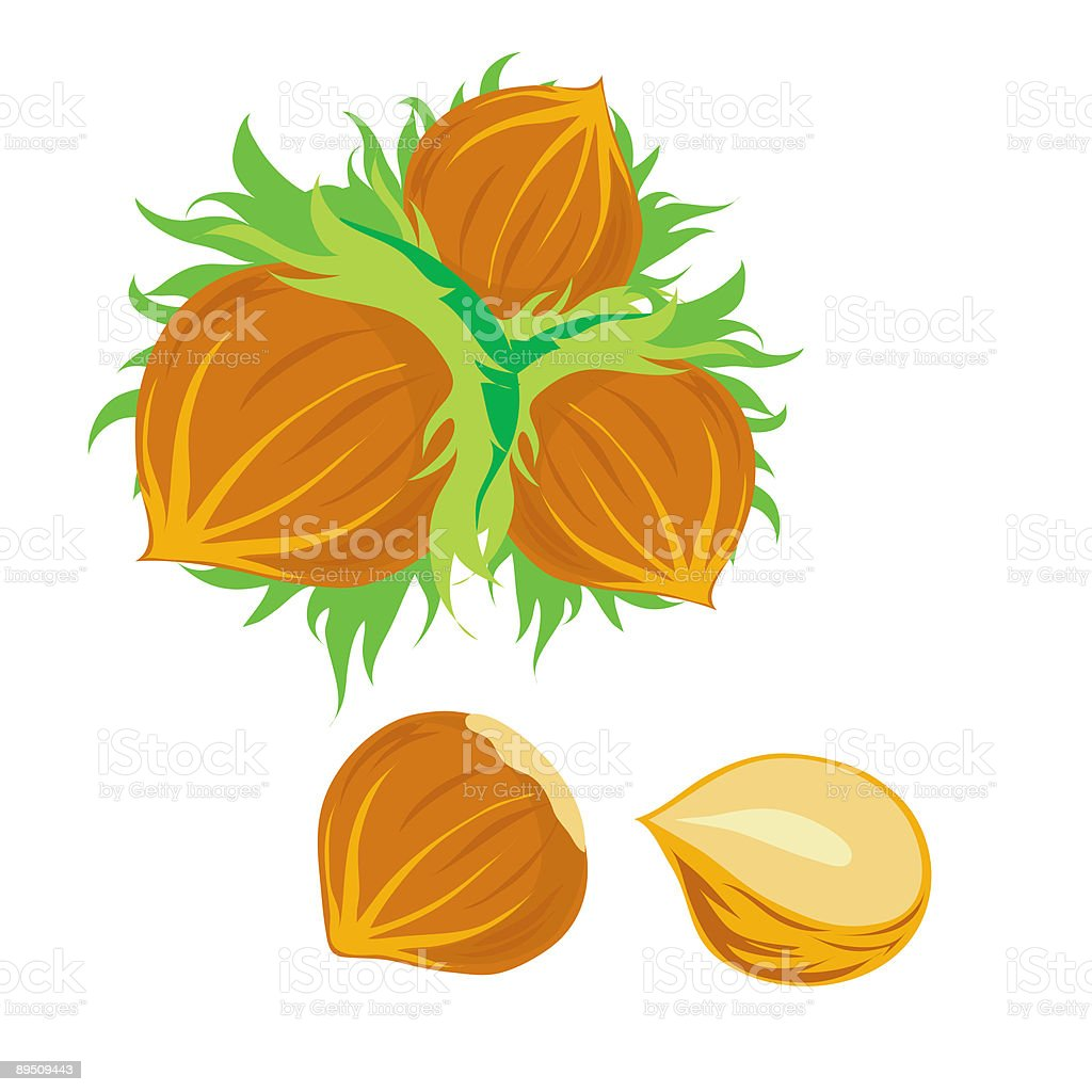 Nuts royalty-free nuts stock vector art & more images of color image
