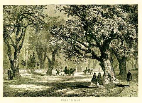 Oaks of Oakland, California | Historic American Illustrations