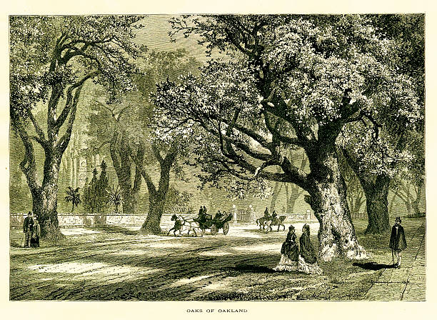 Oaks of Oakland, California | Historic American Illustrations 19th-century engraving of the oaks of Oakland, a port city in California, USA. Illustration published in Picturesque America (D. Appleton & Co., New York, 1872). MORE VINTAGE AMERICAN ILLUSTRATIONS HERE: oakland stock illustrations