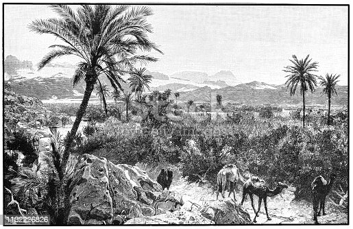 Illustration of a Oasis in Petra (present-day Jordan) Arabia