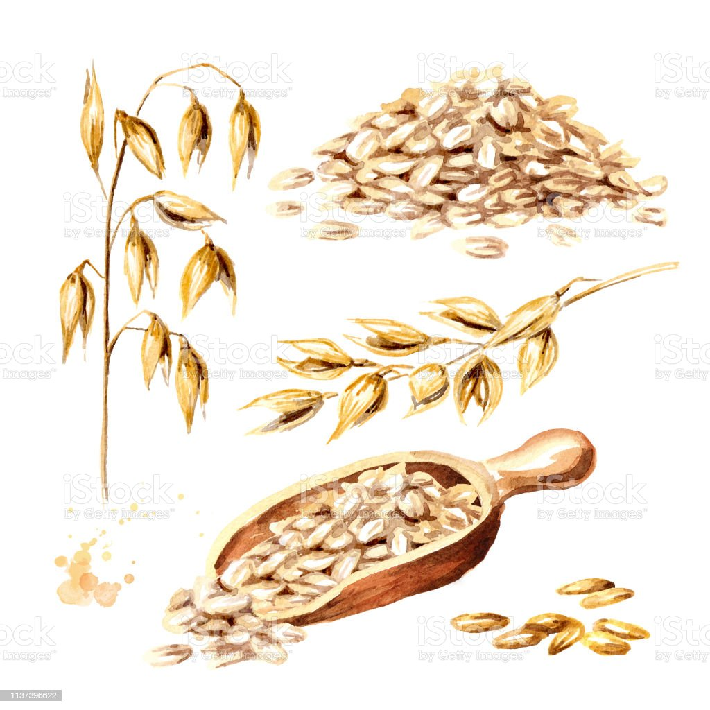 Oat flakes, grain and oat ear set. Watercolor hand drawn illustration  isolated on white background - Royalty-free Agricultura Ilustração de stock