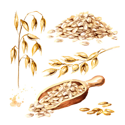 Oat Flakes Grain And Oat Ear Set Watercolor Hand Drawn Illustration Isolated On White Background - Arte vetorial de stock e mais imagens de Agricultura