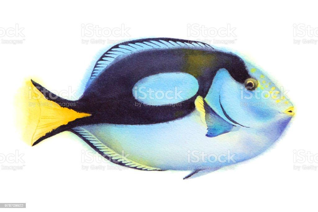 Ocean regal blue tang fish. vector art illustration