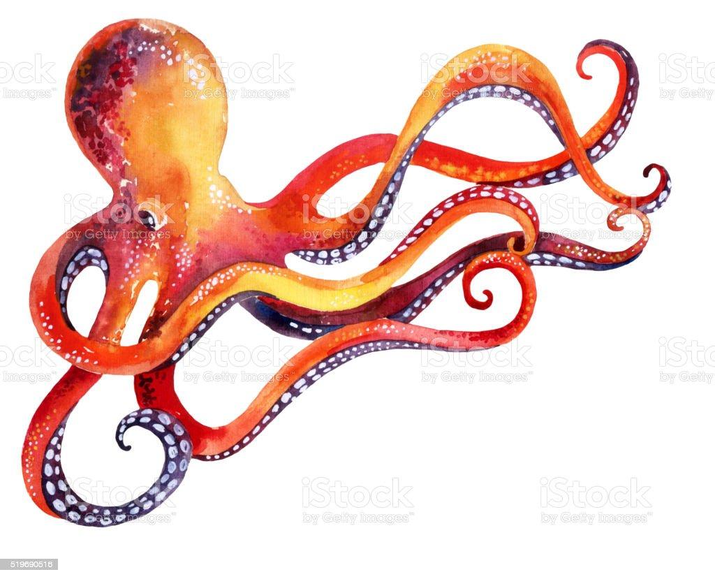 octopus isolated on white background vector art illustration