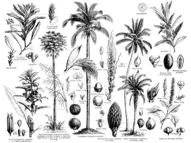 ilustrações, clipart, desenhos animados e ícones de óleo e graxa, produzindo a planta - coqueiro