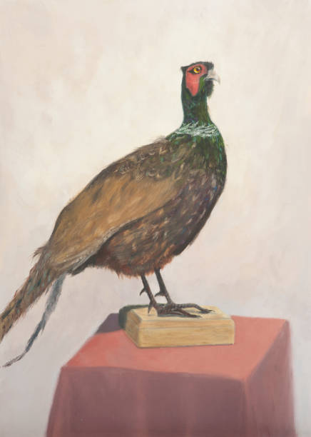 oil painted portrait of pheasant on canvas - oil painting stock illustrations