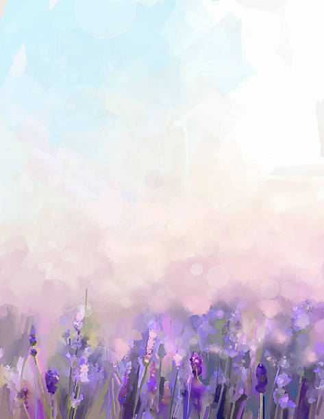 Oil painting lavender flowers in the meadows. Oil painting lavender flowers in the meadows. Abstract oil painting sunshine at flower field in soft purple color and blur style with bokeh background. lavender color stock illustrations