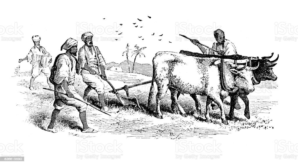 Old Farming Technique Ploughing Stock Illustration - Download ...