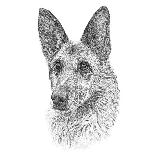 Best Black And White German Shepherd Illustrations ...