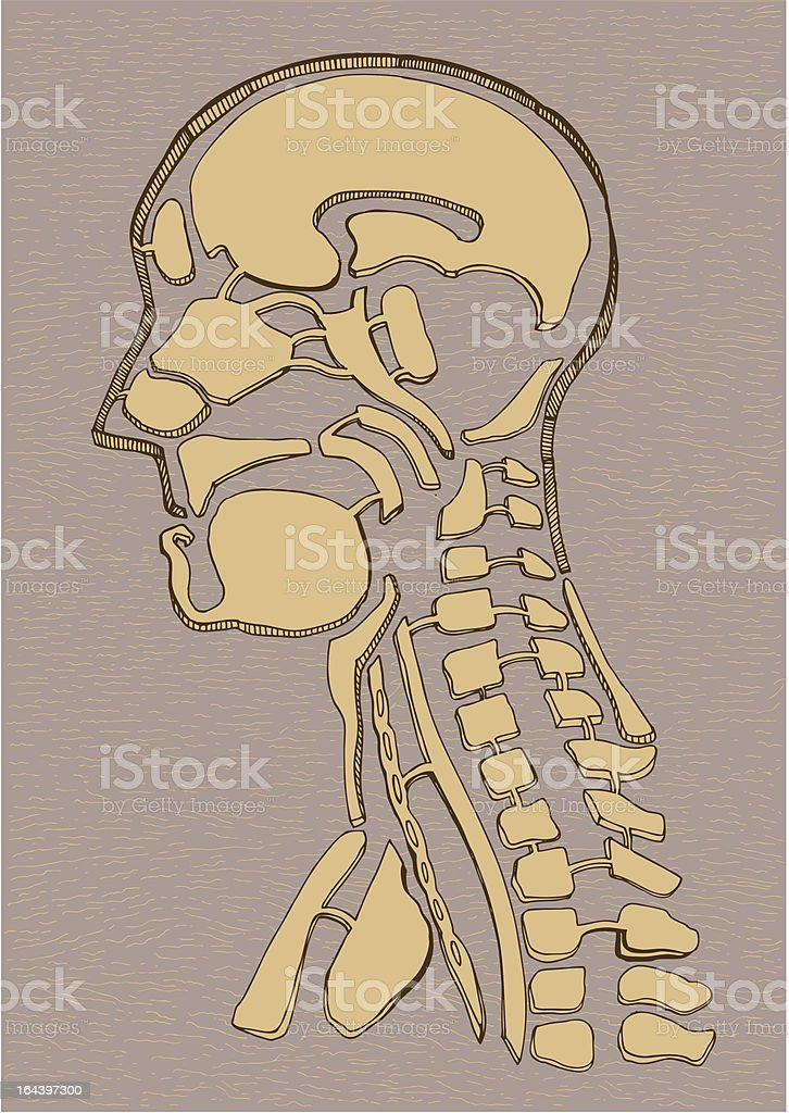 Old Map Human Anatomy Drawing Stock Vector Art More Images Of