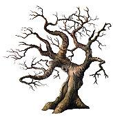 istock Old Oak 154925158