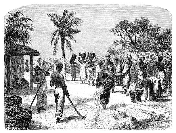 """Old vintage drawing of a cotton harvest African Americans harvesting cotton. Illustration originally published in Hesse-Wartegg's """"Nord Amerika"""", swedish edition published in 1880. The image is currently in public domain. 1880 stock illustrations"""