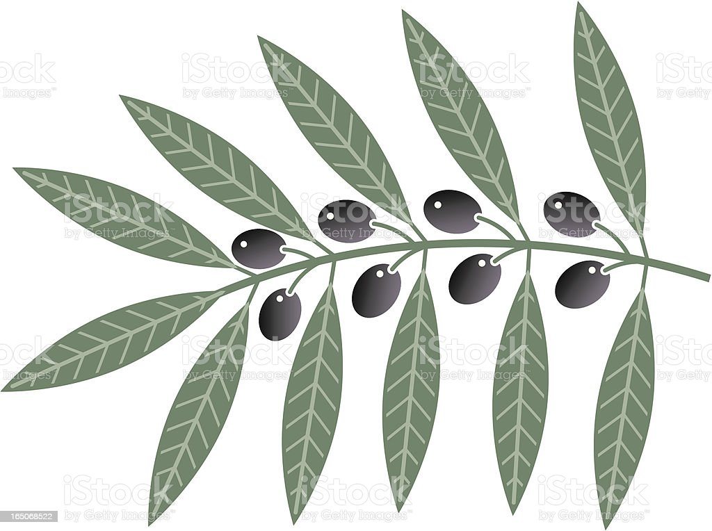 Olive branch royalty-free stock vector art