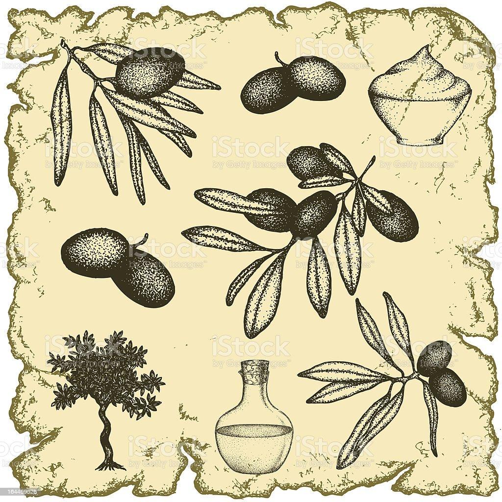 Olive set royalty-free stock vector art