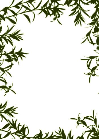 Olive Tree Branches Frame Border