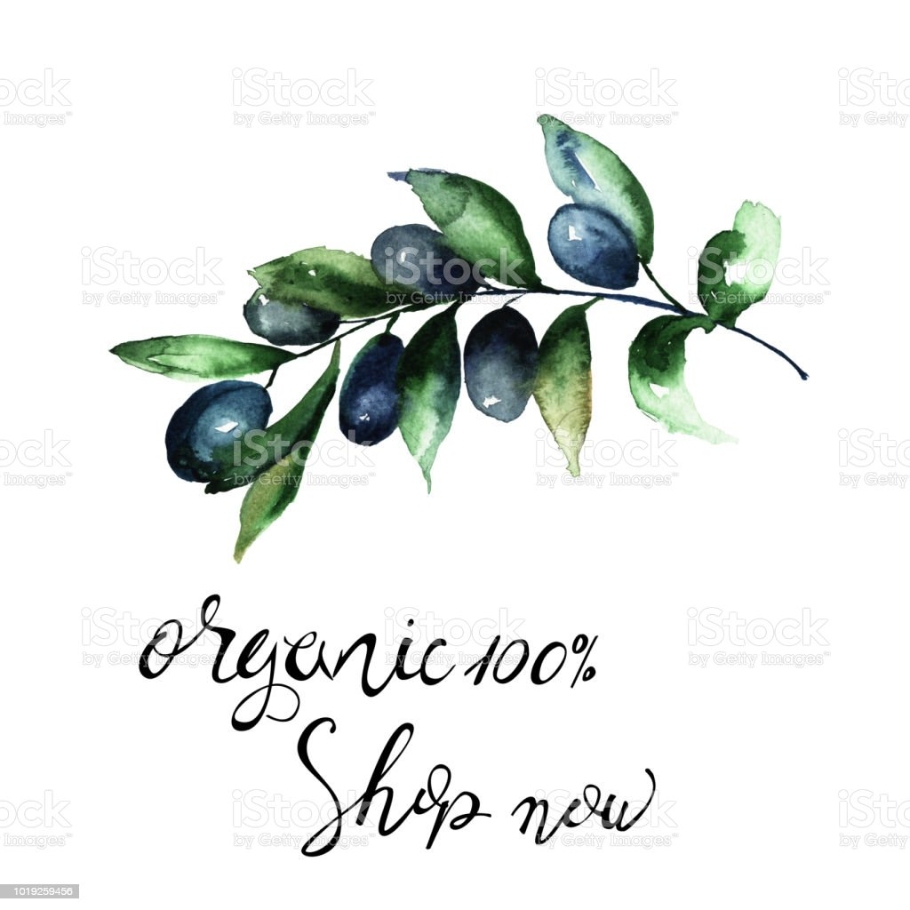 Olive's branch with title organic and shop now vector art illustration