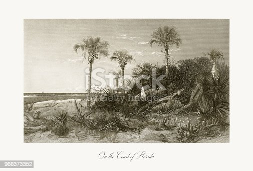 Very Rare, Beautifully Illustrated Antique Engraving of On the Coast of Florida, Florida, United States, American Victorian Engraving, 1872. Source: Original edition from my own archives. Copyright has expired on this artwork. Digitally restored.