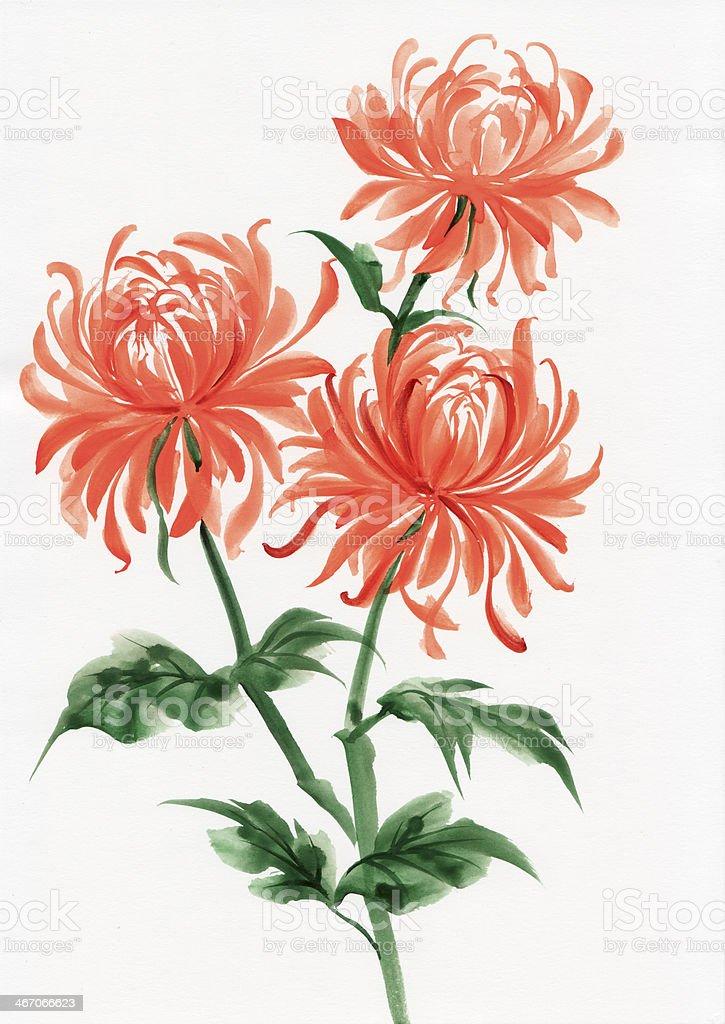 Orange chrysanthemum royalty-free stock vector art