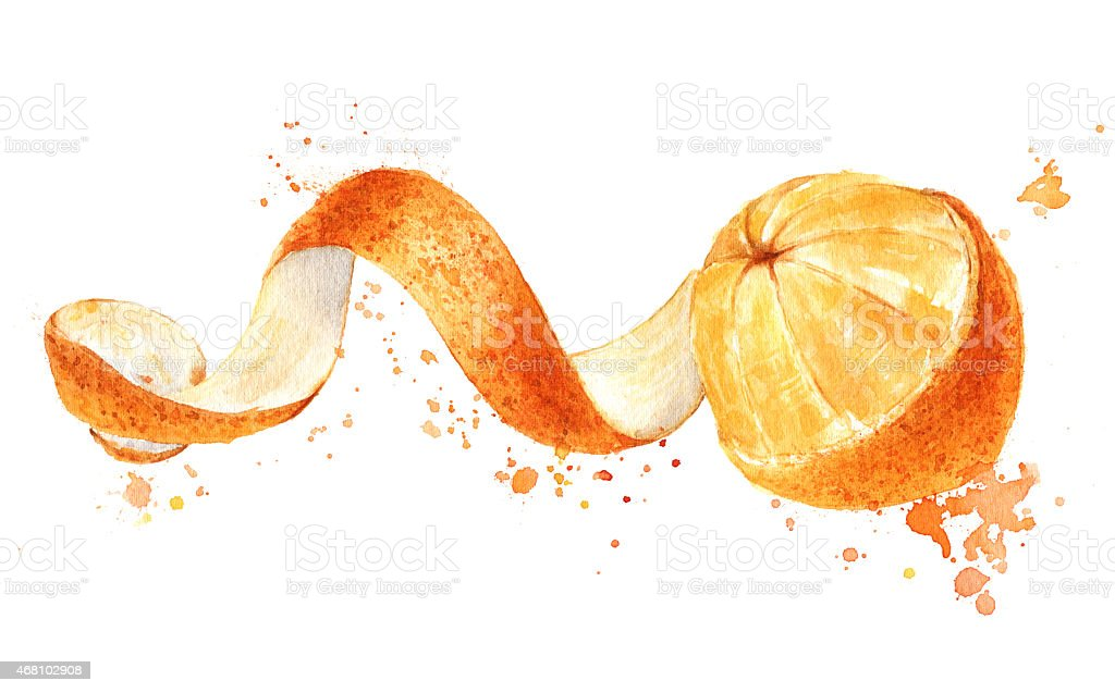 Orange fruit with peeled spiral skin isolated, watercolor vector art illustration
