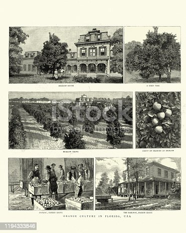 Vintage engraving of Scenes from Orange growing in Florida, USA, 19th Century.  Bigelow grove, Picking Harris Grove, Railway, Harris Grove