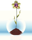 """""""Modern Vector Illustartion of glass vase, rose bowl with orchid flower plant.  All Elements shuch as Orchid, Bowl, Soil, Reflection are in separate layers for easy color changes and manuvers."""""""