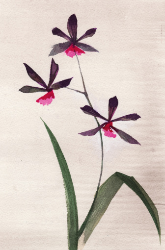 Original watercolor painting of 3 orchids on watercolor paper. Photographer's own artworksee more