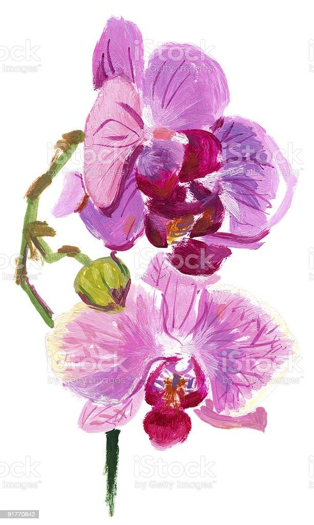 Orchidea vector art illustration