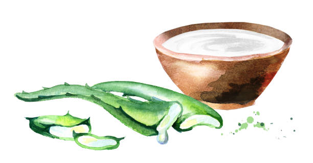 organic aloe vera and yogurt. watercolor hand drawn illustration - aloe vera stock illustrations