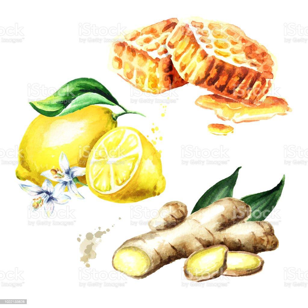 Bio Frische Ingwer Zitrone Und Honig Setzen Aquarell Handgezeichnete