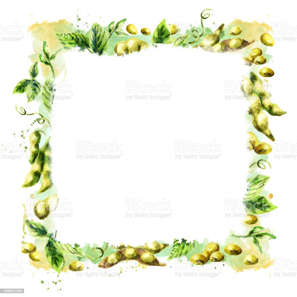 Organic Soybean square background. Watercolor hand drawn template vector art illustration