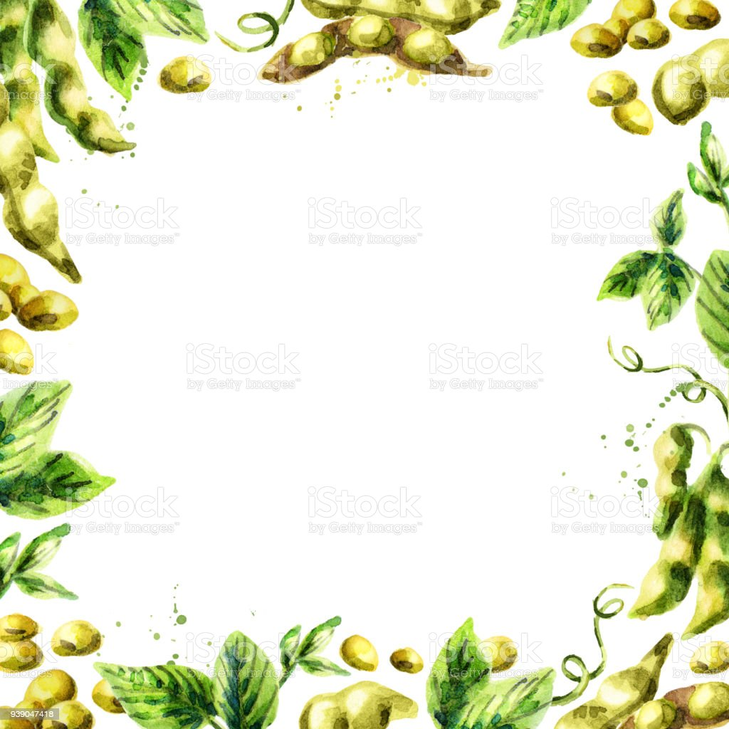 Organic Soybean square template. Watercolor hand drawn background vector art illustration