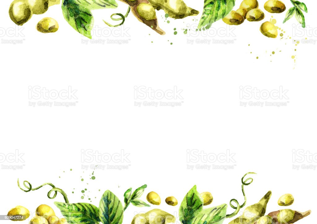 Organic Soybean template. Watercolor hand drawn background vector art illustration