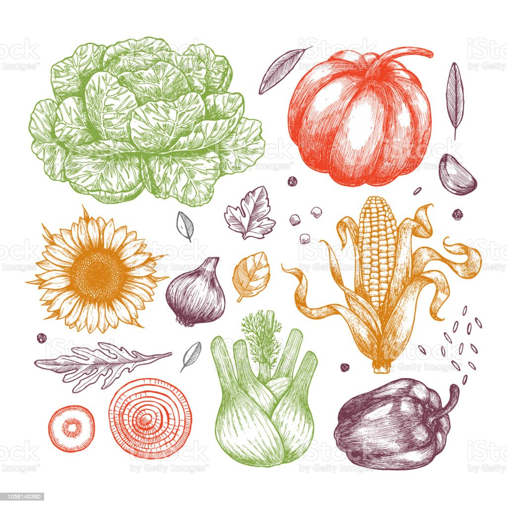 有機野菜のコレクションです手書きヴィンテージ野菜ライン アートの