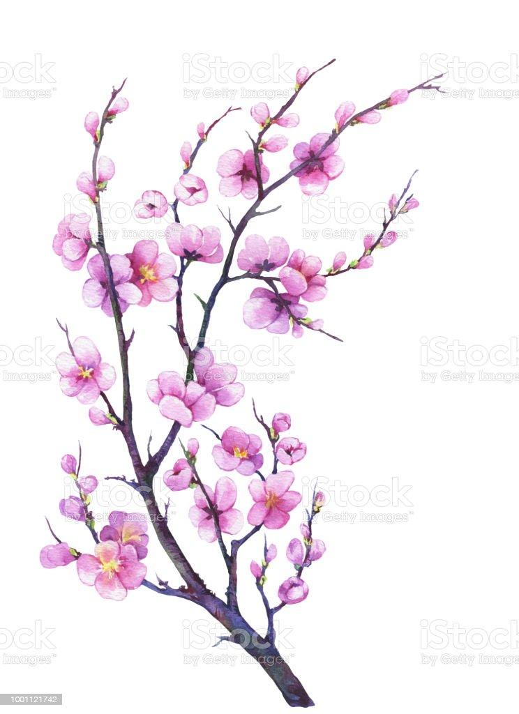 Ilustración de Rama Cereza Oriental Con Flor De Sakura De Japón De ...