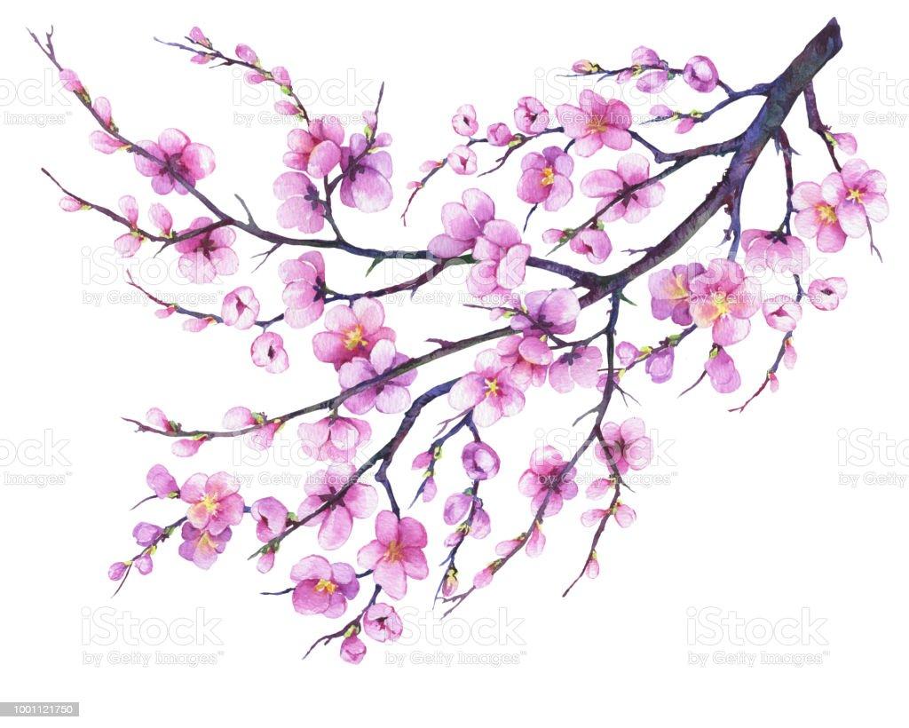 Oriental Cherry Branch With Pink Flowers Japan Sakura