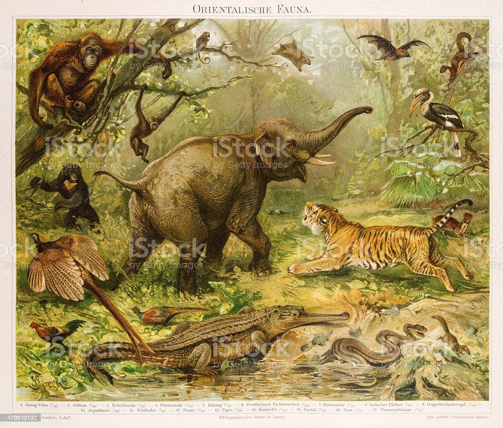 fauna in asia