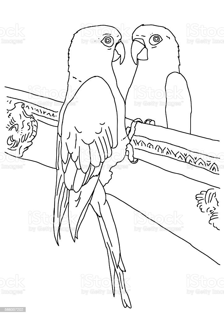 original outline drawing of a parrot royalty free stock vector art