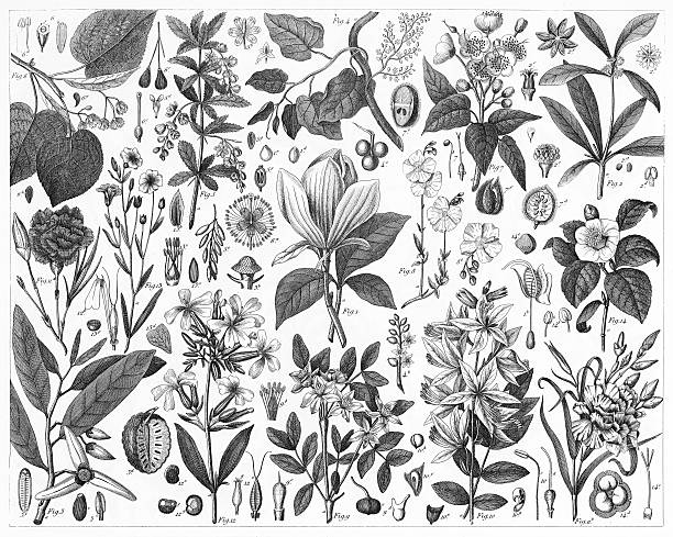 Ornamental Plants vector art illustration