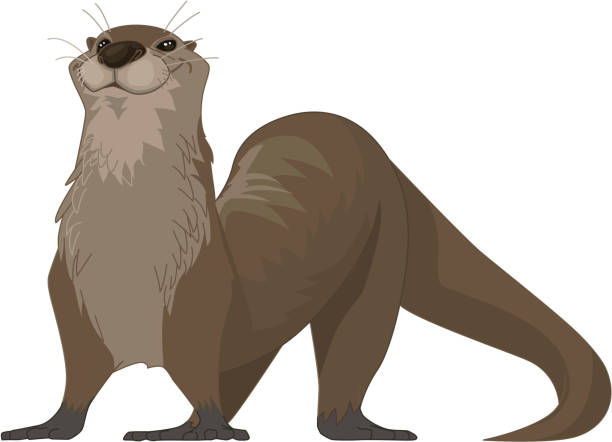 otter illustration - otter stock illustrations, clip art, cartoons, & icons