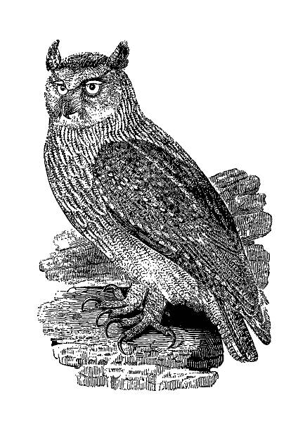 owl antique print (isolated on white) - black and white owl stock illustrations, clip art, cartoons, & icons
