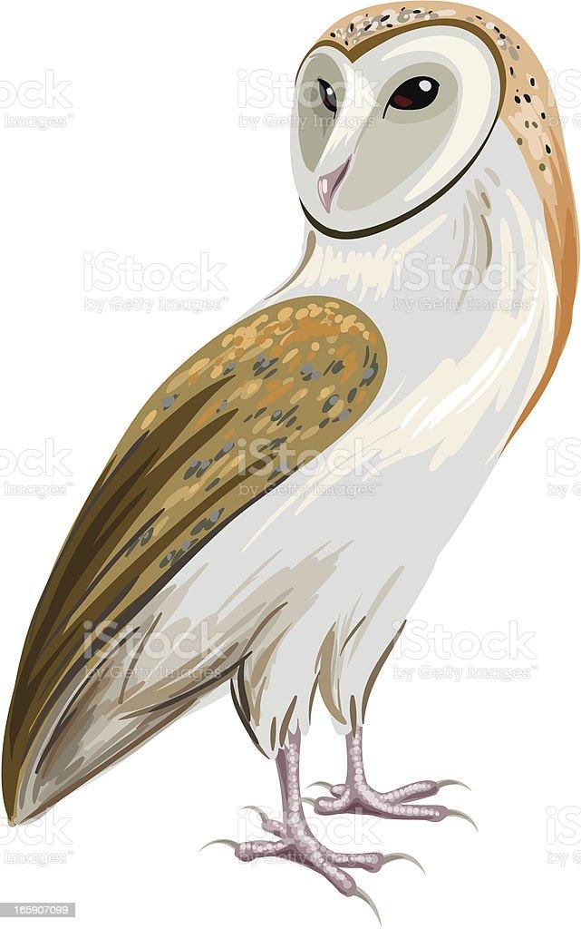 Owl向量藝術插圖