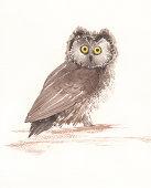 istock Owl 174934904