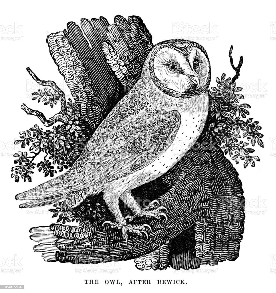 Owl royalty-free owl stock vector art & more images of 19th century