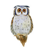 istock Owl. The image of an owl in watercolor. 1218250950