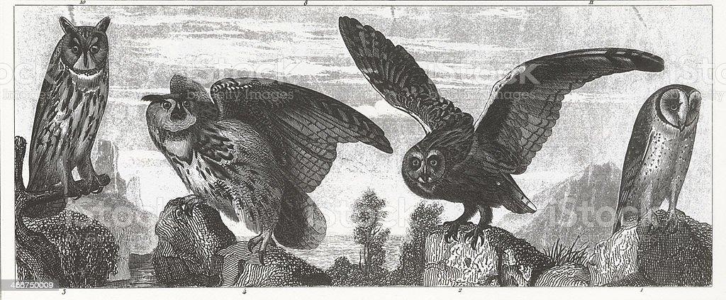 Owls Engraving向量藝術插圖