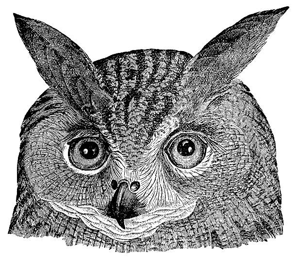 owl's head | antique animal illustrations - black and white owl stock illustrations, clip art, cartoons, & icons