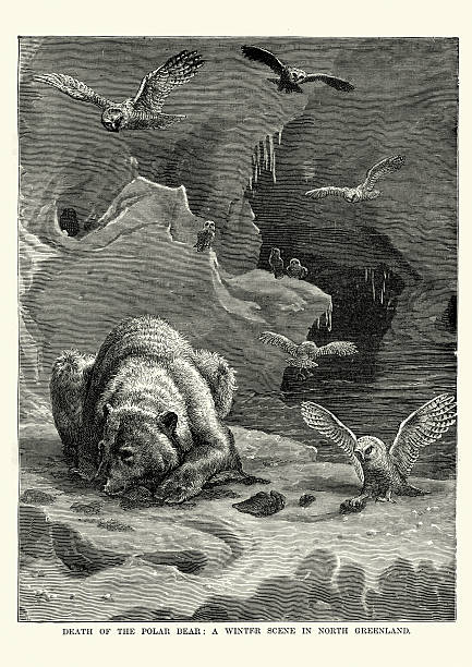 Owls scavenging on a Polar Bear Carcass vector art illustration
