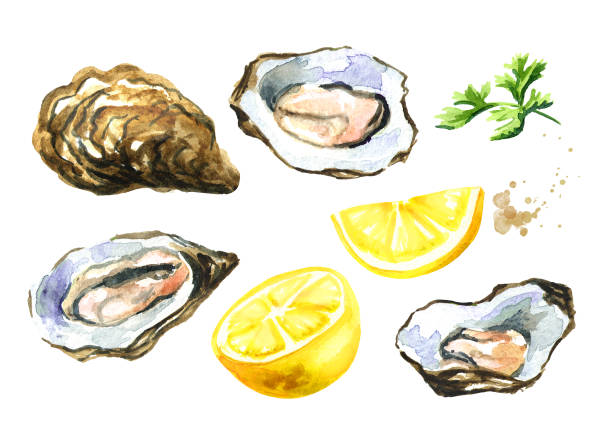 Oyster shells with lemon, seafood set. Watercolor hand drawn illustration isolated on white background Oyster shells with lemon, seafood set. Watercolor hand drawn illustration isolated on white background love potion stock illustrations
